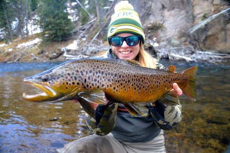 Beautiful brown trout.