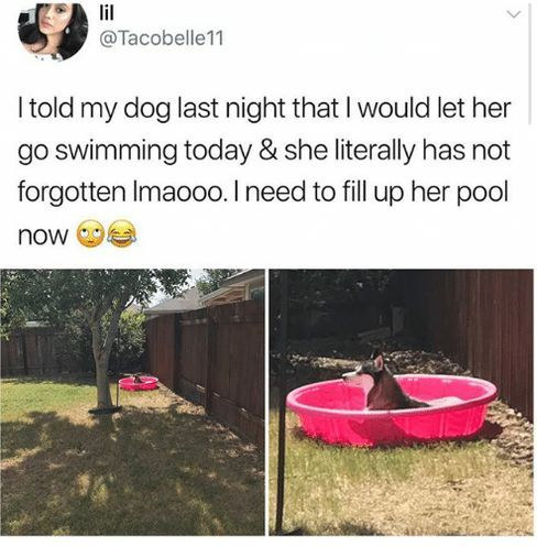 110 Funny Pictures & Memes For Today (#72)