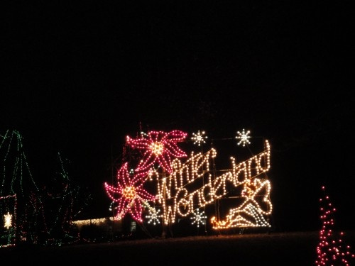 Tilles Park Winter Wonderland