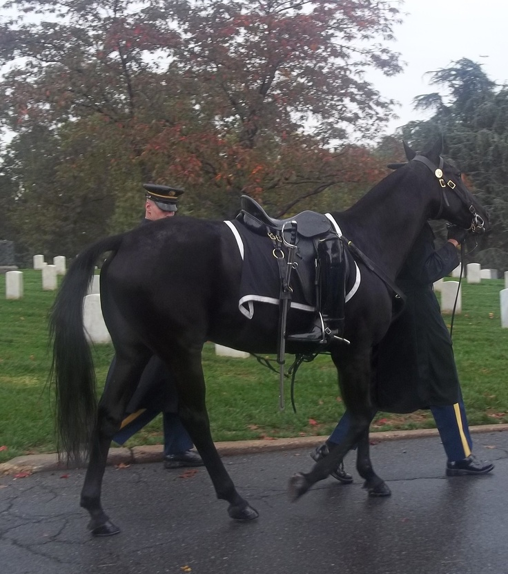 The Riderless Horse, Arlington Cemetary