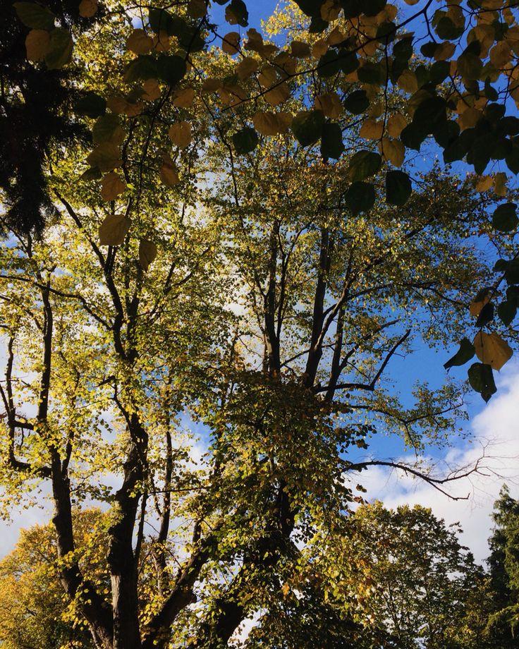 Autumn in Rathmines