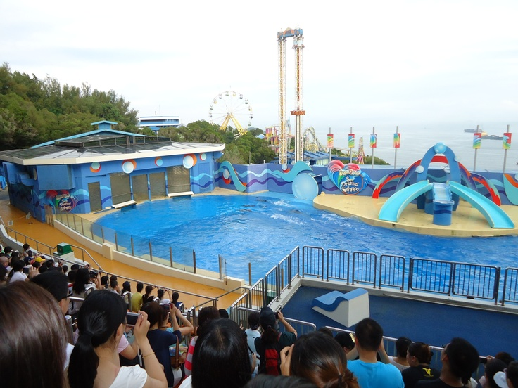 dolphins in ocean park Ocean park hong kong general admission with hotel pickup  all reviews dolphin showhair raiserroller coasterocean expresscable cargiant pandasgrand .