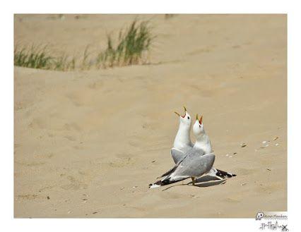 Texel Island Photos - Community - Google+