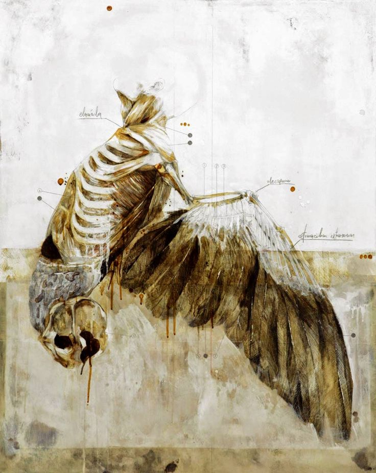 nunzio paci: If I can't walk I will learn to fly / Se non potrò camminare imparerò a volare