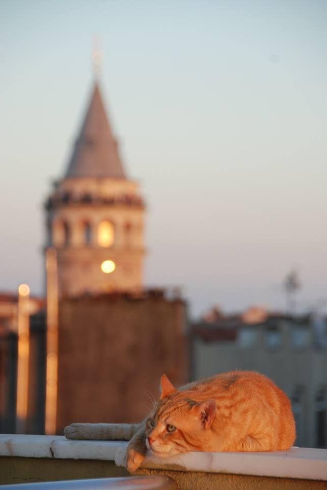 İstanbul'un Kedileri..