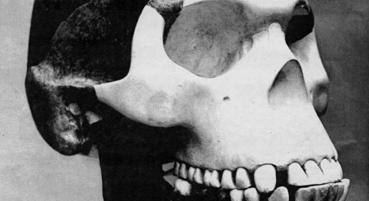 We finally know who forged Piltdown Man one of sciences most notorious hoaxes