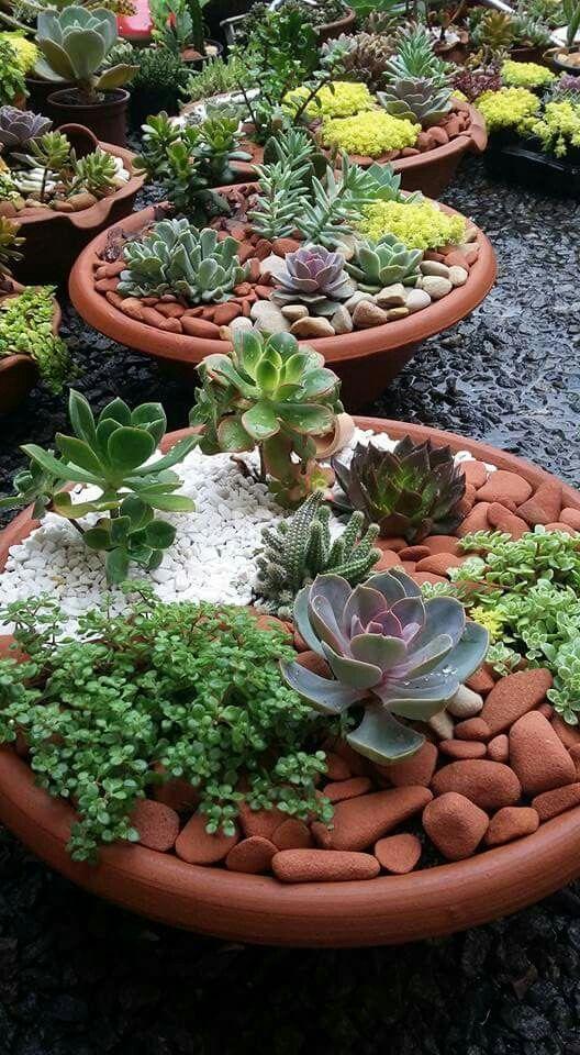 26 Les meilleurs suggestions de chantiers dans le monde # succulentgardenindoor # succulentga …   – Suculentas