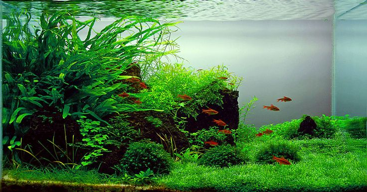 Natural looking freshwater aquariums freshwater aquarium for Natural fish tank