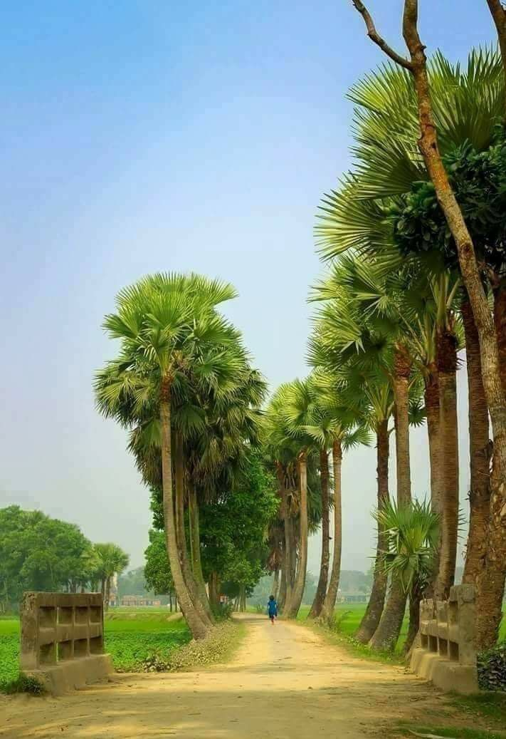 Pin By Md Babar Ali On Bangladesh Beautiful Nature Nature Pictures Village Photography