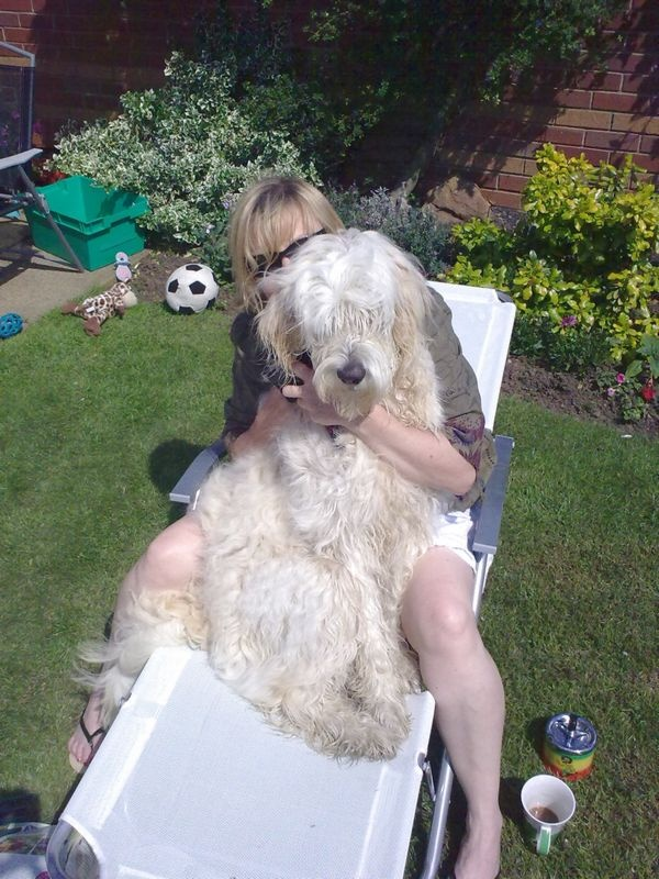 Goldendoodle Grooming Skill