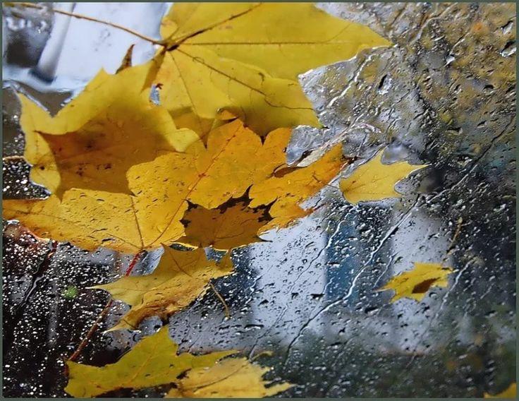 Картинки осень желтые листья дождь