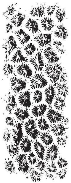 stamp set kaisercraft coral