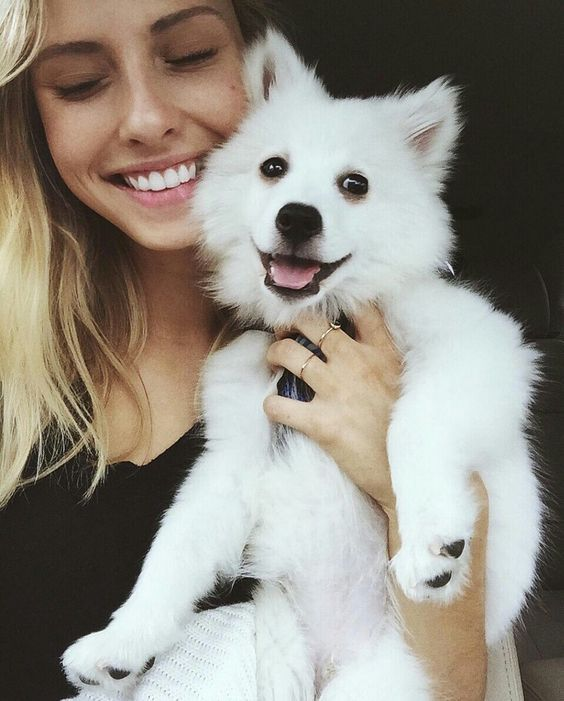 cute happy puppy.
