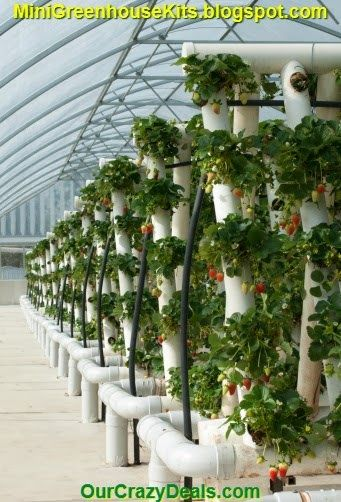 This pin is a photo of a commercial grade hydroponics growing system setup.