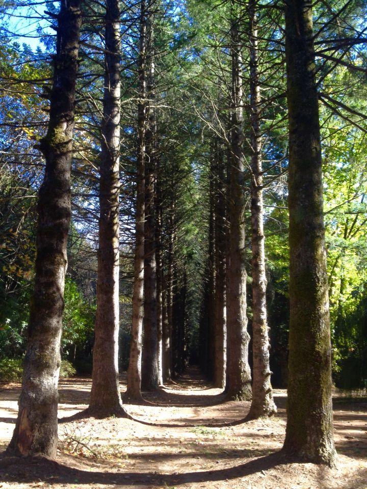 Breenhold Gardens, Mt Wilson, NSW