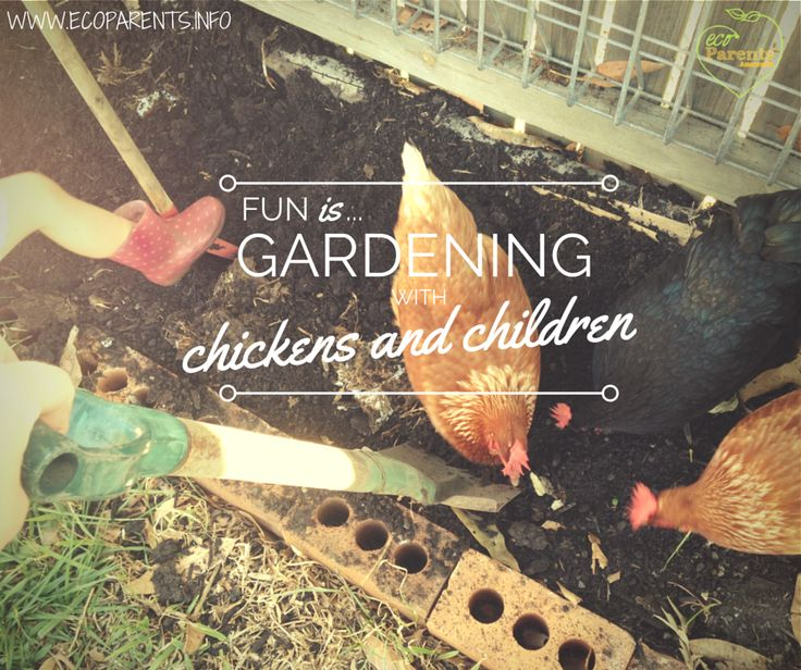 No worm is safe when you garden with chickens and children.