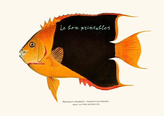 Fish vintage plate instant download printable door Lebonprintables, €2.00