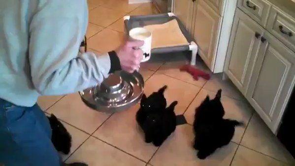 💠なぜか、まわっちゃぅ子猫😍❤❤ Twitter