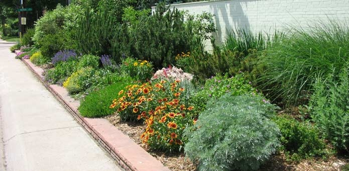 Low water landscaping along sidewalk maiden grass and for Maiden grass landscaping ideas