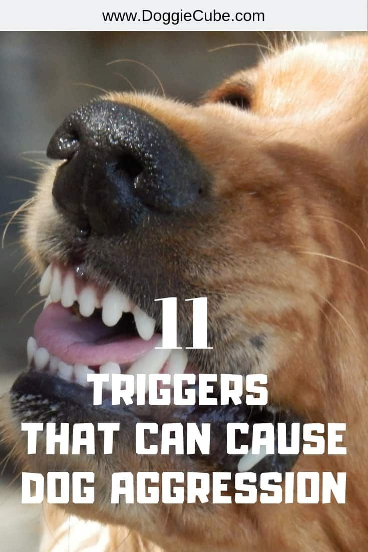 How To Stop Dog Aggression Aggressive Dog Dog Training Dogs