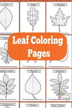 Leaf Coloring Pages Free Printable - Add to Botany unit for decoration/labeling.