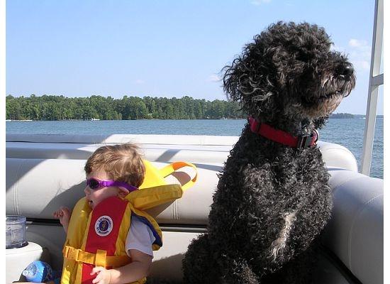 coolest dog ever - Sailor