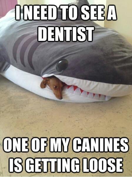 Shark bite! hehe
