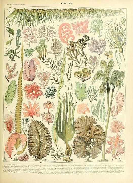 Las algas marinas son plantas que viven tanto en océanos como en mares. No necesitan de un gran hábitat para sobrevivir, y conservan el total de sus propiedades desde que nacen hasta que mueren. En los últimos años, mucho se ha estudiado sobre losbeneficios de las algasmarinas, tanto en forma medicinal, como en aspectos de …