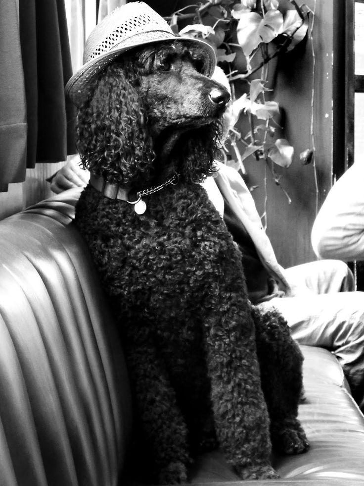 Niki Jones Photography: Poodle Hat