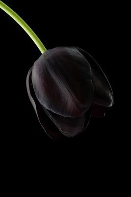 Black Tulips  ( keep away from black roses as they would look too gothic/halloween)