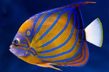 pesci tropicali marini - Cerca con Google