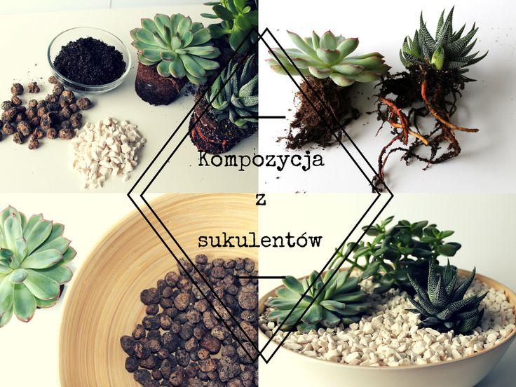 Kompozycja z sukulentów. Rośliny dla zapominalskich. Diy. Krok po kroku udekoruj swoje mieszkanie/dom. Succulents in your home.