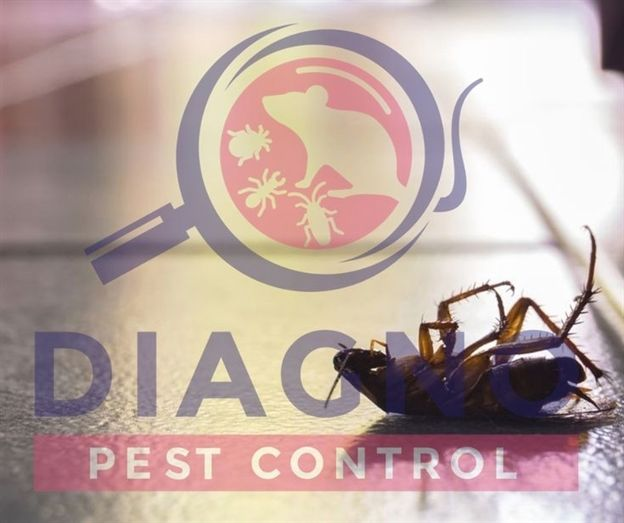 What All You Need To Know About Pest Control In 2020