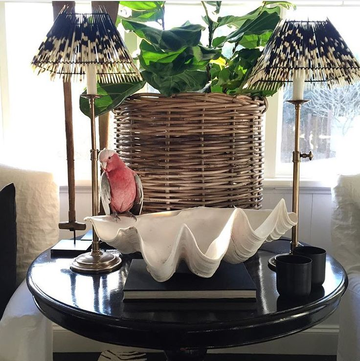 Even Galah's love RG! Little Cliffy is having fun hanging out with our Vintage Rattan Basket at the home of Harolds Finishing Touches. www.rgimports.com.au