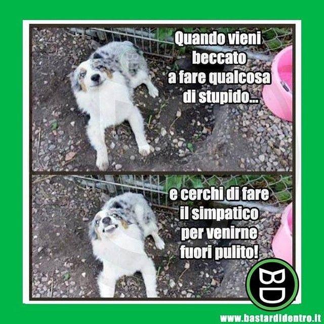 Something stupid... #bastardidentro #sorriso #cane #ipnoticamentebastardidentro www.bastardidentro.it