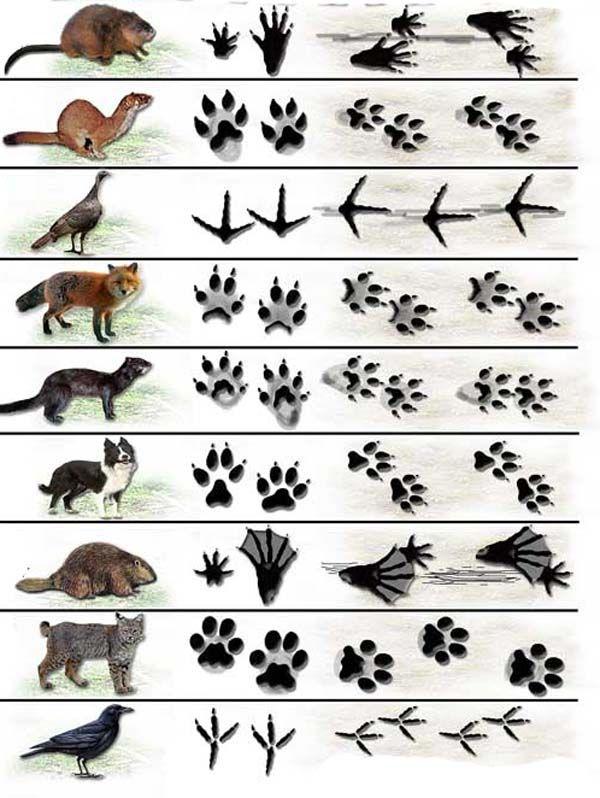 Картинки животных для детей, дикие и домашние, их детеныши
