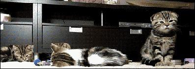 Cat farts