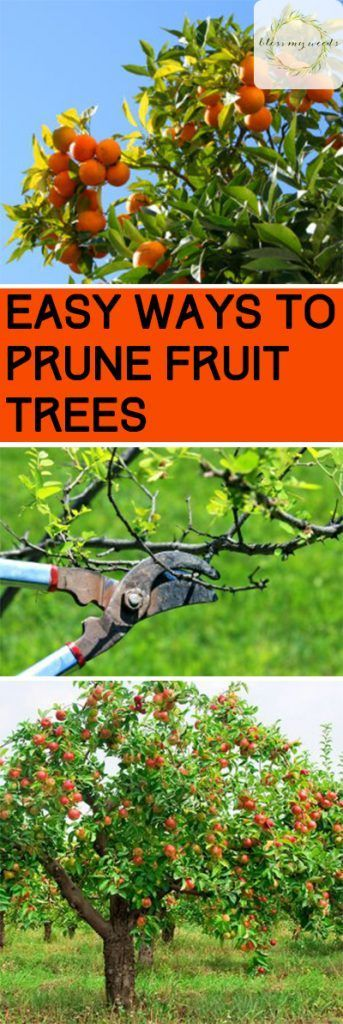 Easy Ways to Prune Fruit Trees | Bless My Weeds