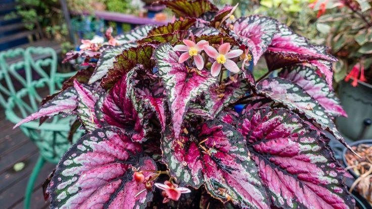Mais de 1000 ideias sobre plantas de sombra no pinterest sombra de jardim plantas de jardim - Flores de sombra ...