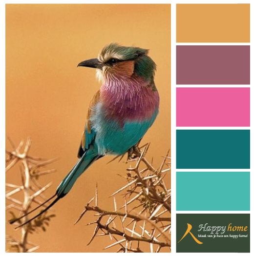 Kleurinspiratie van de woonwinkel Happy Home - Heerlijk !! De geweldige kleuren van veren maken een mooie combinatie bij elkaar. Met als basis kleur een licht oranje geeft het rust. www.happy-home.nl