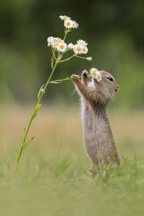 Hmm... Dat Smell ! by Julian Rad