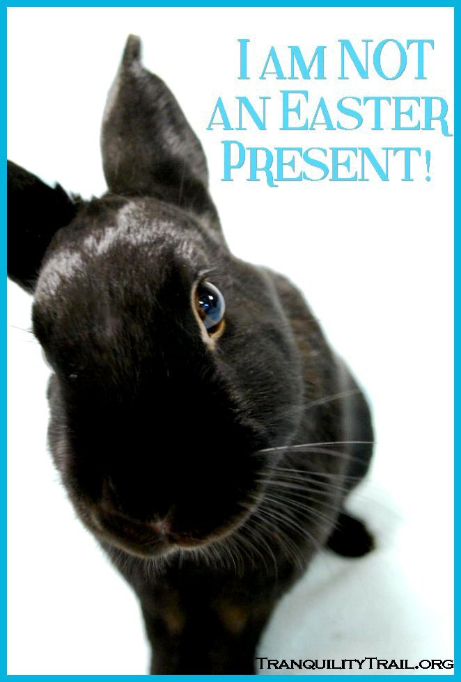31 best Advocacy images on Pinterest Bunnies, Bunny and Bunny - resume rabbit cost