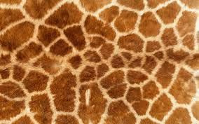 Image result for giraffe skin