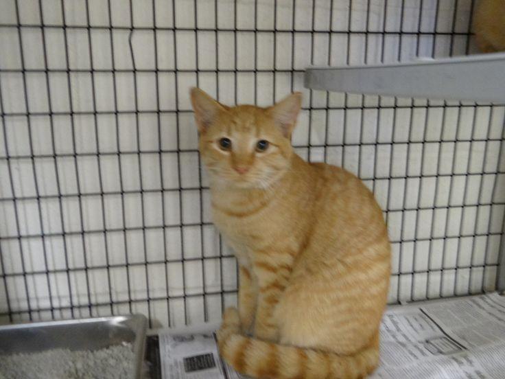 Many pretty cats County NC animal shelter Animal