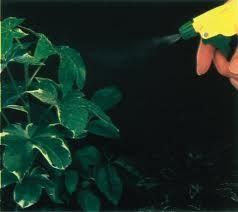 usos para el peróxido de hidrógeno 19.............Ayuda a tus plantas. Para evitar hongos, añadir un poco de peróxido de hidrógeno para su spray botella la próxima vez que estés plantas spritzing.