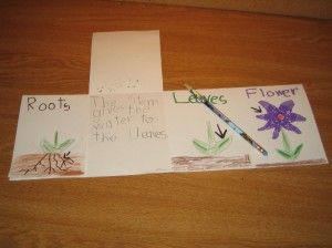 Drawing & Writing about Plant Parts