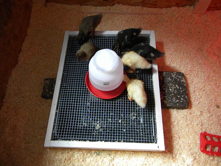 Put waterer on screen to keep it clean. Nice diy brooder inspiration here too