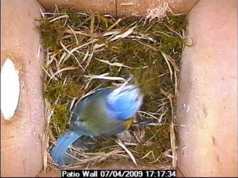 bird building a nest time lapse. five in a row. grandfather's journey.