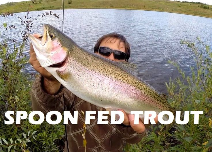 17 best images about canadian fishing adventures on pinterest, Fly Fishing Bait