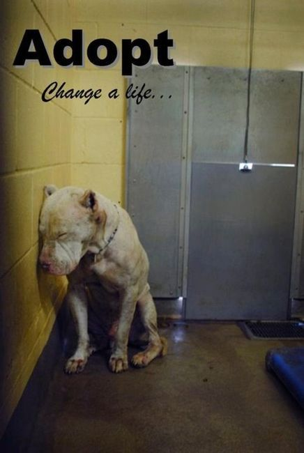 I would give anything to end animal suffering....don't shop, please adopt